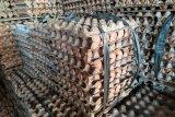 Harga telur ayam ras di Bandarlampung bertahan
