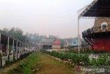 Asia Farm merugi 30 persen akibat asap