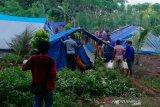 Mensos ajak pengungsi korban gempa bumi Ambon kembali kerumah