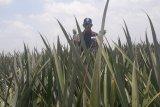 GGP dukung peningkatan eskpor komoditas pertanian