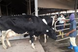 Kemitraan RI-Australia beri kepastian bagi industri daging ternak