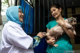 Sebagian besar anjing di Kepulauan Sangihe sudah vaksin anti rabies