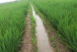 Sumsel dukung OKU jadi  sentra produksi beras