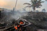 Kebakaran lahan Pekanbaru hanguskan kebun nanas, ular-ular ditemukan mati