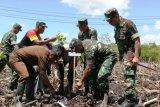 TNI tanam 5.800 pohon mangrove di Kota Jayapura dan Biak