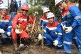 Pertamina Dumai gandeng pelajar tanam 1.000 mangrove