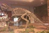 Lagi, bekas jejak kaki dinosaurus 100 juta tahun ditemukan di China