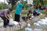 Disperpa Kota Magelang tebar bibit nila di demplot mina padi