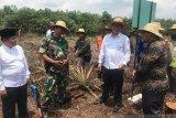 BRG sulap ladang api di Rupat jadi sumber ekonomi