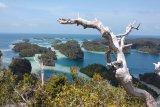Pencarian wisman Swiss hilang di hutan Papua dihentikan sementara