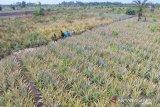 KLHK targetkan restorasi gambut 2 juta ha hingga 2030