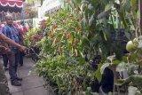 Kampung sayur Yogyakarta didorong lakukan digitalisasi pertanian