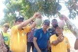 Bupati Indramayu resmikan Agrowisata Situ Bolang