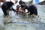 Mahasiswa yang tergabung dalam Generasi Baru Indonesia (GenBI) Jember, menanam bibit terumbu karang di objek Wisata Bahari Pasir Putih, Bungatan, Situbondo, Jawa Timur, Kamis (17/10/2019). Bersih Indonesia GenBI Jember 2019 merupakan gerakan perbaikan perilaku menjaga lingkungan di beberapa wilayah di Jawa Timur yang berisi berbagai program antara lain workshopecotourism, pengelolaan bank sampah, serta penanaman terumbu karang.Antara Jatim/Seno/zk