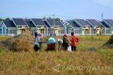 Produksi beras Kota Madiun hanya 11.000 ton akibat lahan berkurang