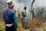 Dishut Sulawesi Tenggara: 731,41 hektare hutan terbakar