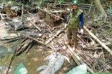 Waspada buaya makin banyak berkeliaran di Sungai Mentaya