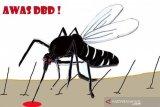 Kini nyamuk demam berdarah juga menyerang di sore hari