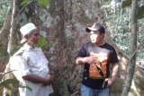 Hutan adat Rimbo Tolang Dharmasraya menuju kawasan edukasi