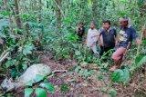 Warga ketakutan saat Harimau masuk ke kebun di Bahorok