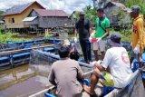 Pemberdayaan budidaya ikan nila oleh PT GBSM dinilai positif oleh pengamat ekonomi