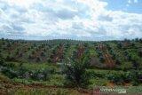 Asosiasi petani sawit minta pola PIR dipertahankan
