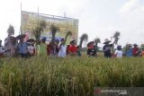 Diproyeksi sebagai lumbung pangan nasional, Kalteng siapkan pendanaan