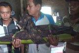 Polres Ngawi tangkap ayah tega aniaya anak kandung hingga tewas
