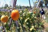 Lapas Nunukan Kaltara tata kawasan wisata agro dan edukasi
