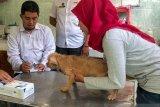 Penanganan rabies dipusatkan di Rumah Sakit Pratama dan Puskesmas Jetis