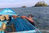 Ratusan bintang laut berduri Raja Ampat dimusnahkan