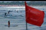 Wisatawan mancanegara bermain selancar di dekat kawasan berbendera merah atau larangan berenang di Pantai Kuta, Badung, Bali, Jumat (8/11/2019). Badan Meteorologi Klimatologi dan Geofisika (BMKG) mengeluarkan peringatan dini untuk mewaspadai potensi gelombang tinggi mencapai 2 meter di Selat Bali, Selat Badung, Selat Lombok dan Samudera Hindia selatan Bali akibat perubahan cuaca. ANTARA FOTO/Nyoman Hendra Wibowo/nym
