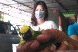 BKSDA Lampung sita ribuan ekor burung tanpa dokumen