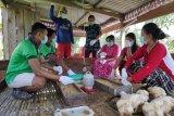 Bantuan PT GBSM bagi peternak ayam sangatlah tepat
