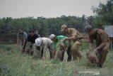 Bupati: OKU dapat menjadi sentra produksi bawang merah