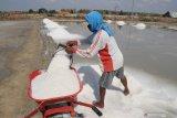 Presiden Jokowi izinkan impor langsung garam industri untuk bahan baku