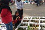 Kaktus Tanaman Estetik Untuk Orang Pemalas (Video)