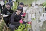 Grup Band poprock Wolftank pun ikut tanam mangrove