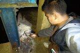Seharian pergi memancing, Hendrizal ditemukan tewas mengambang di embung