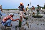 TNI-Polri tanam ratusan bibit pohon bakau di Pantai Apainabo Waropen