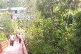 Taman bakau Ruar jadi tujuan wisata alam di Biak Numfor
