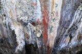 Lukisan prasejarah ditemukan  di Situs Ambesibui di Teluk Wondama
