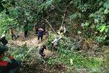 Petani tewas diterkam harimau di Lahat, diduga masih berkeliaran BKSDA pasang box trap