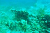 Peneliti temukan bangkai pesawat Jepang di Teluk Wondama