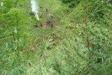 Tujuh hektare ladang ganja ditemukan polisi di Pegunungan Tor Sihite