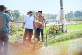 Wagub Sulsel bantu atasi kekeringan warga Kabupaten Wajo