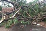 18 rumah di Sumba Timur rusak akibat angin kencang