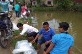 Dorong ekonomi masyarakat, Karang Taruna di Payakumbuh lepas 10 ribu bibit ikan nila