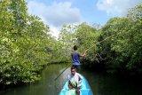 Kawasan ekowisata bakau hadir di Wakatobi