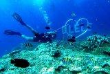 Spot dasar taman laut Olele di Kabupaten Bone Bolango yang memilikik daya tarik tersendiri bagi penggemar diving. (ANTARA FOTO/Adiwinata)
